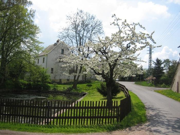 Dorfteich in Kaltofen