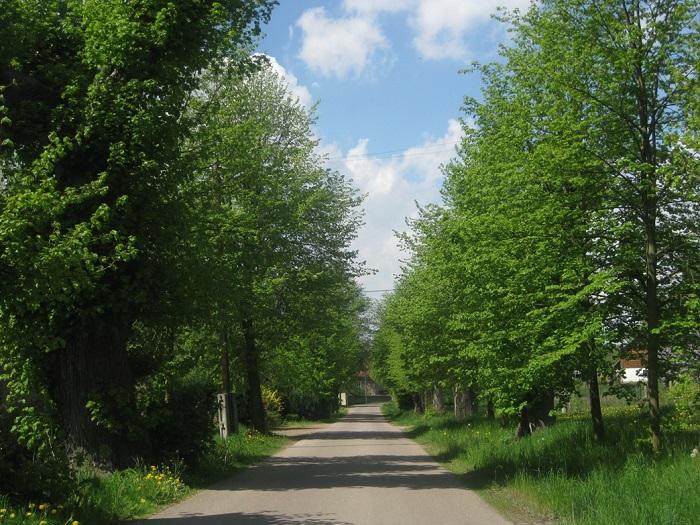 Frühling an der Lindenallee in Gersdorf.