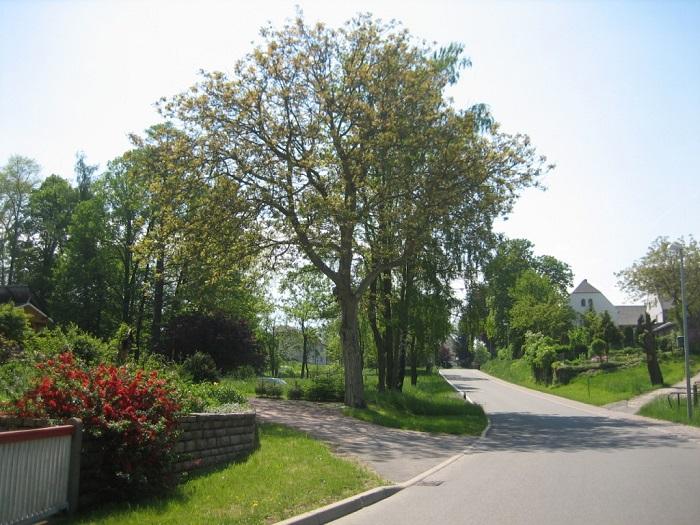 Viel Grün bietet die Ortsmitte von Mobendorf