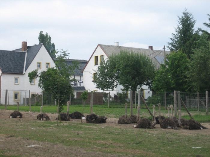 Straußenhof Pappendorf